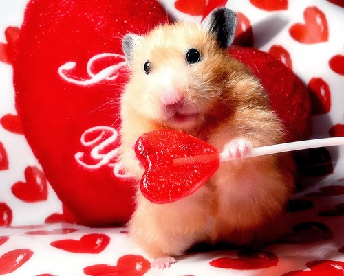 Cute valentine 39 s day funny animals funny animals - Valentine s day animal pics ...