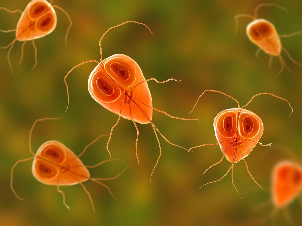 Do you know what do Parasitic infections are in our Bodies