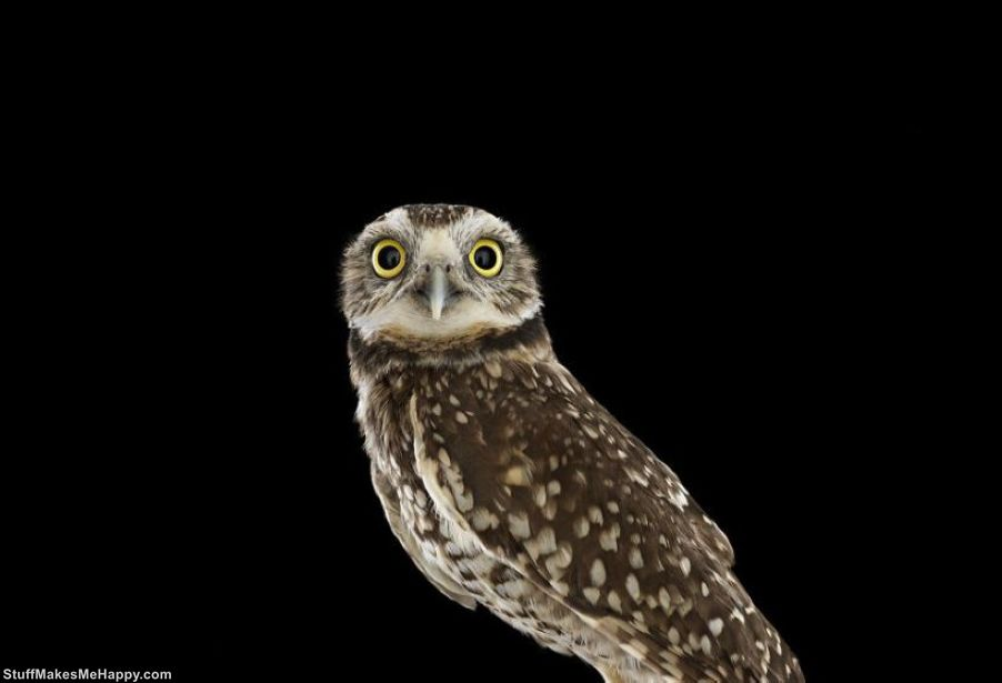 Wisdom Keepers: Brad Wilson Captures the Mystical and Truly Wonderful Portraits of Owls