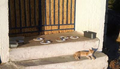 białe papierowe talerze przyciśnięte kamieniem obok wylegujący się rudy kot