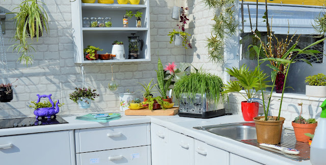 A white kitchen area with plants all around.
