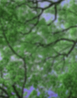 Oil Paint Tree Blur Background Free Stock Photo