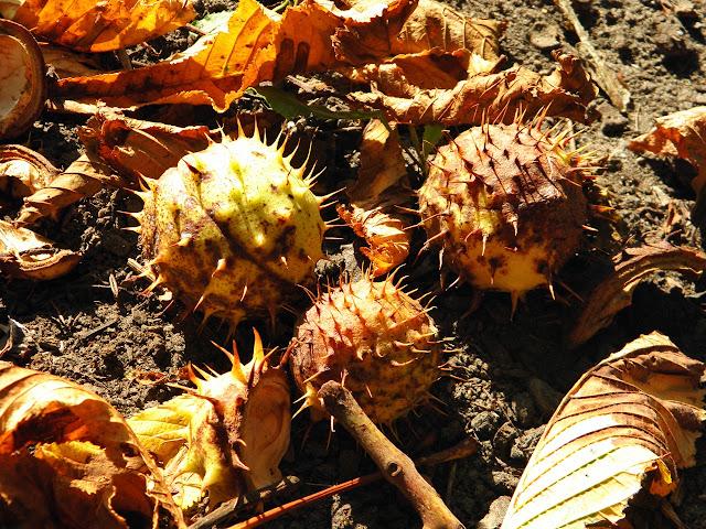 e-fectyinspiracji, jesień, jesiennie, kasztany, jarzębina, jesienne nastroje,