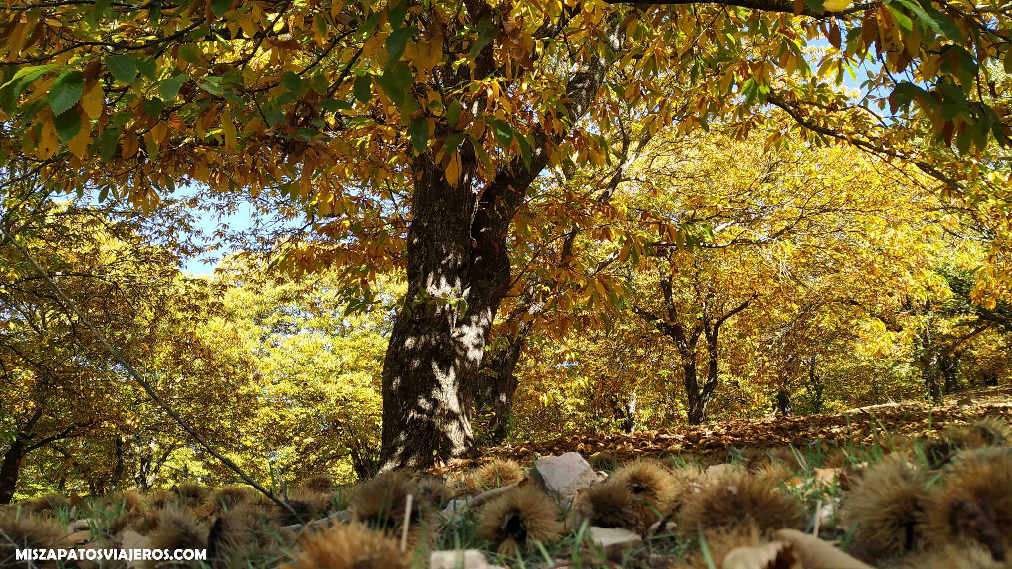 Miszapatosviajeros Bosque Del Cobre De Pujerra A Igualeja Entre Castanos