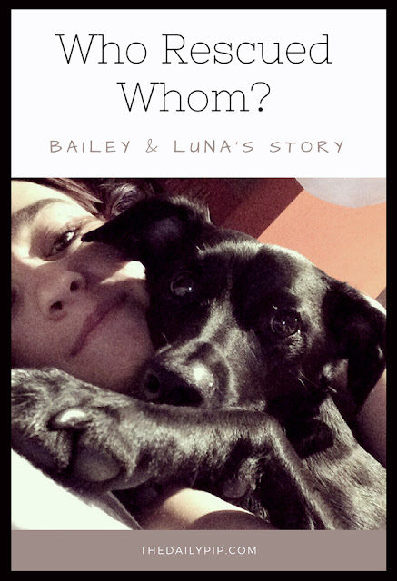 Bailey, a fearful rescue dog, helps his new mom breathe and overcome her anxiety and asthma