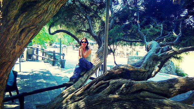 Em uma árvore no Parque General San Martín, em Mendoza.