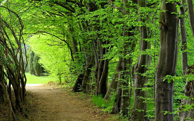 badrinadh forest