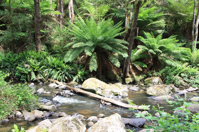 creek running through forest