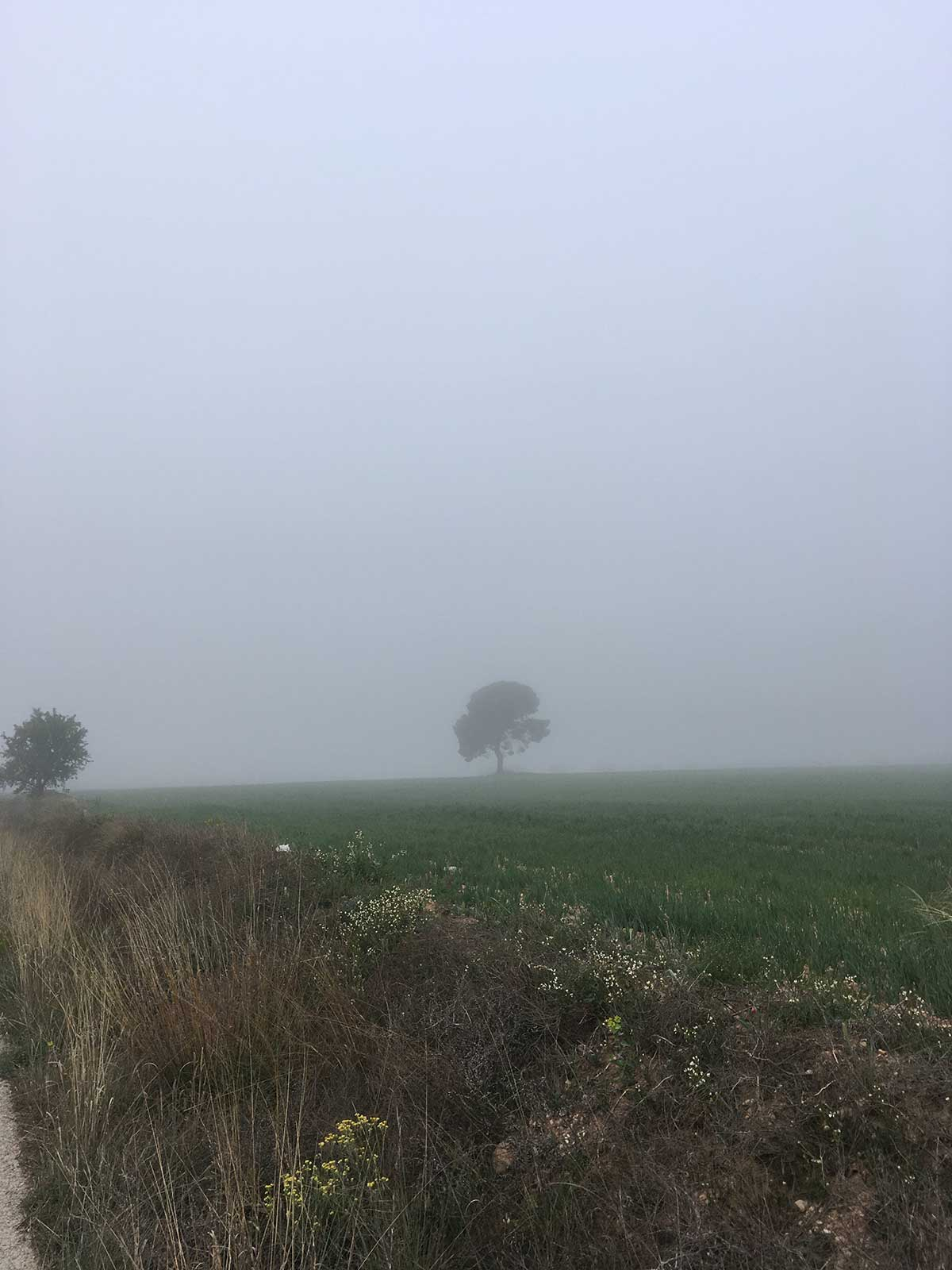 Niebla matinal en el Hondo del Campo, Yecla