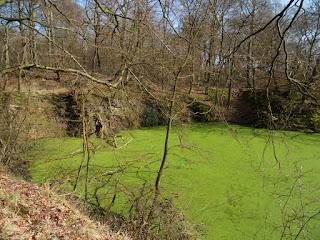 Der See aus einem anderen Blickwinkel. Er ist mit grünen Pflanzen überzogen