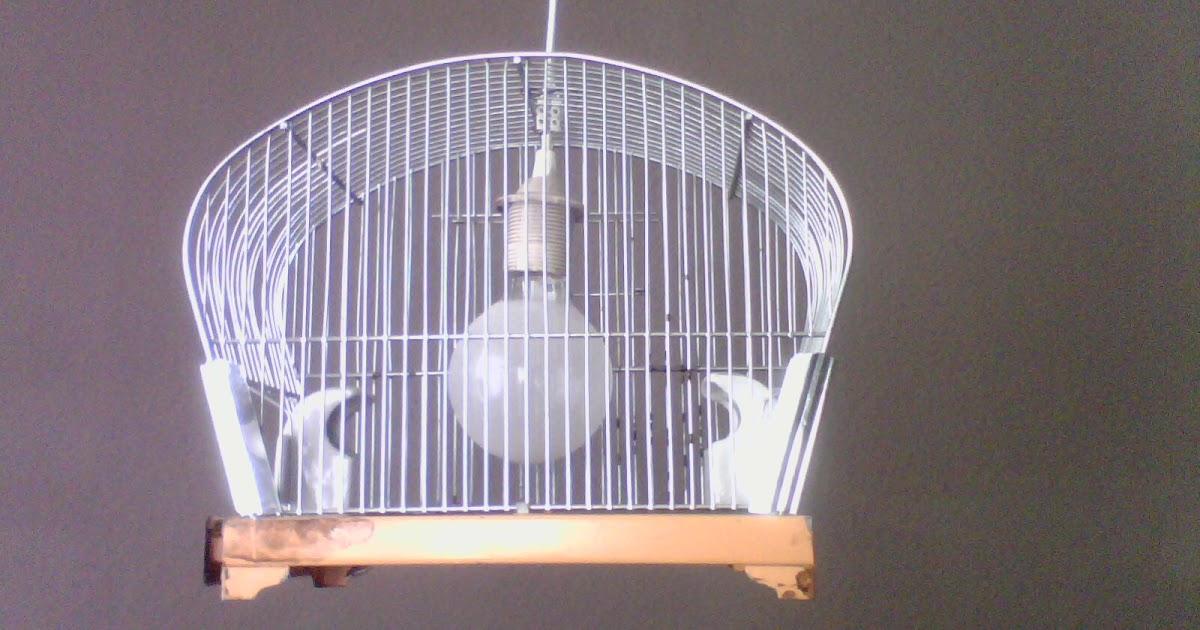 norwigas blo blog wohin mit dem alten vogelk fig. Black Bedroom Furniture Sets. Home Design Ideas