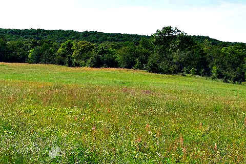 A green meadow or hayfield
