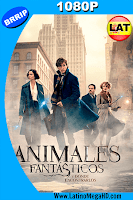 Animales Fantásticos y Dónde Encontrarlos (2016) Latino HD 1080P - 2016