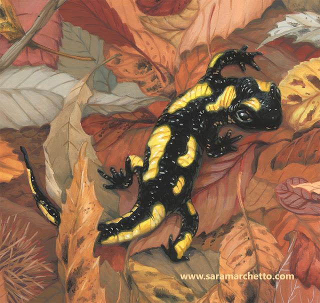 salamandra-illustrazione