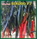 Cabe Besar BINGGO F1