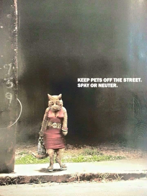 Keep your pets off the street. Spay or neuter
