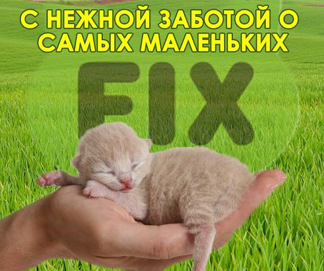 Наполнители для кошачьих туалетов(Часть I)