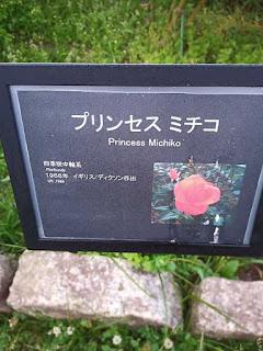 バラ(プリンセス ミチコ)