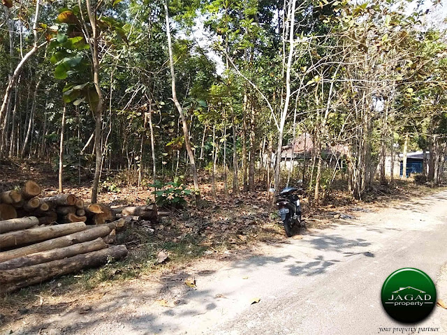 Tanah Pekarangan Luas di Triwidadi Pajangan