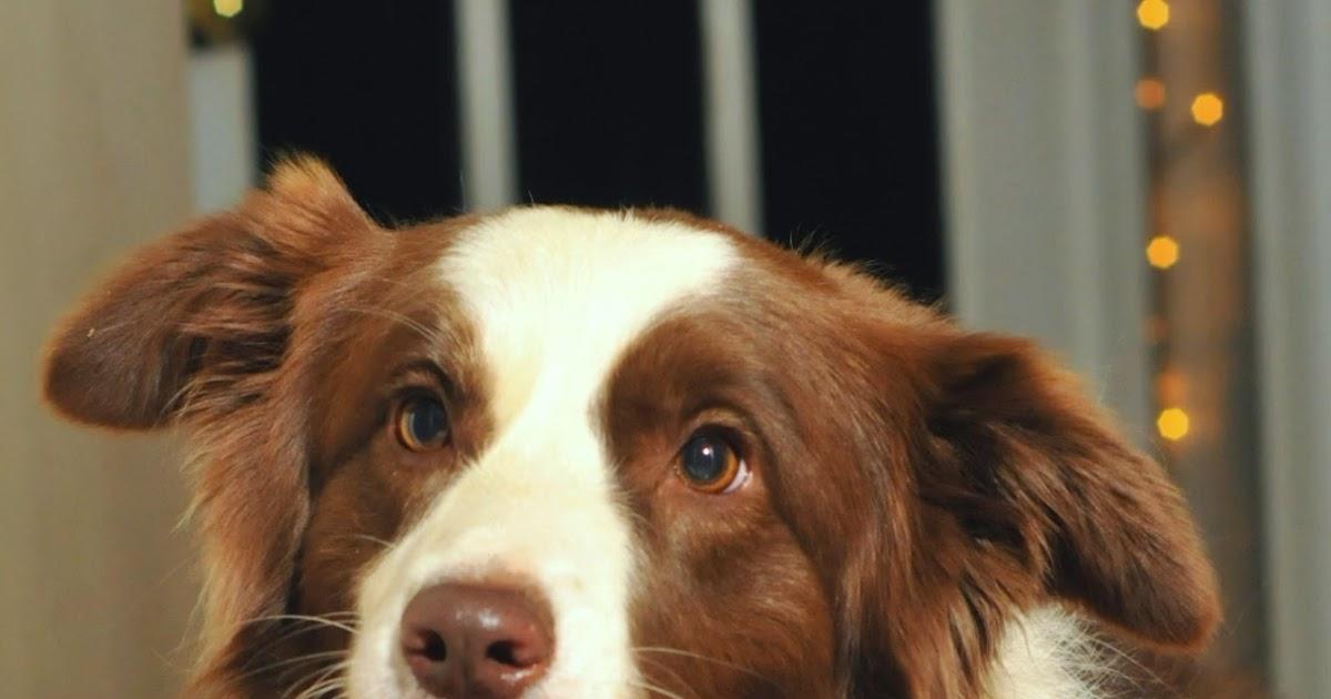 Modern Dog Training Blogspot