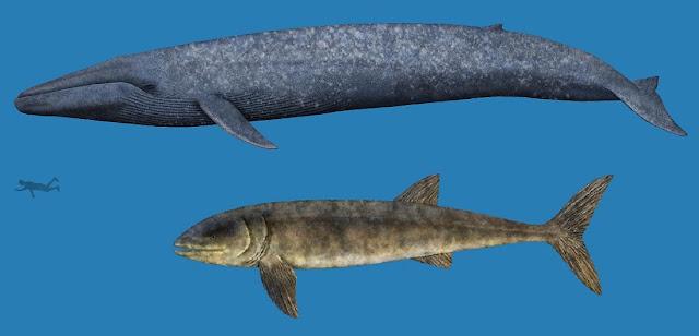 Comparación tamaño Leedsichthys con la Ballena azul