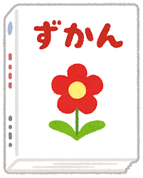 花図鑑のイラスト