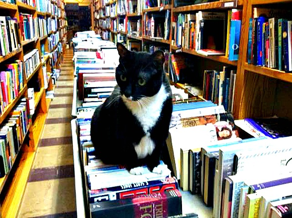 page library cat