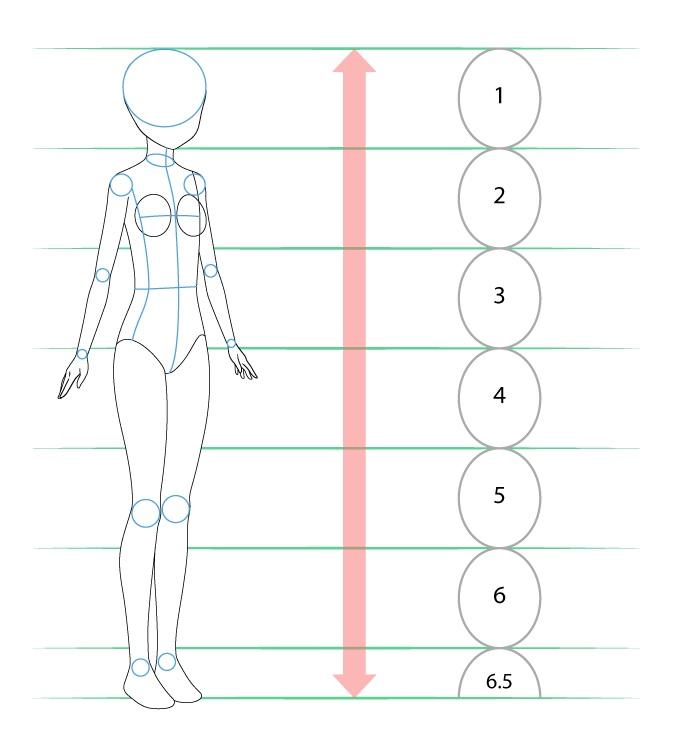 Proporsi dan struktur tubuh gadis anime