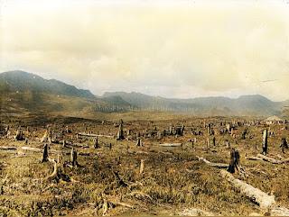 proses perluasan lahan di perusahaan karet anggoli