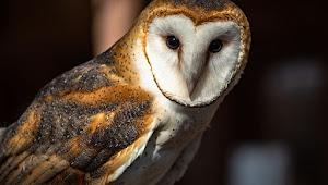 10 Jenis Makanan Anak Burung Hantu Yang Benar