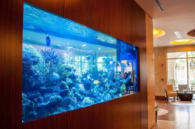 akuarium display ukuran besar