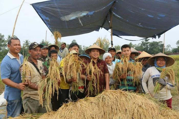 Gubernur  Lampung Optimis produksi 4,4 juta ton gabah kering giling