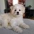 Fulltime Werken Met Een Puppy: Zo Doen Wij Dat