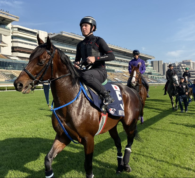 INDY CHAMP horse in Hong Kong