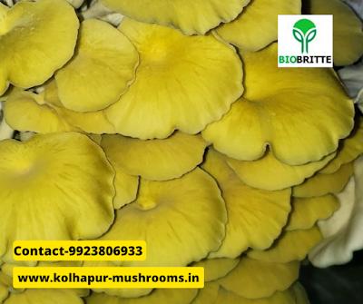 Mushroom cultivation franchise