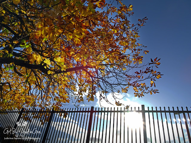Fall Trees & Iron Fence