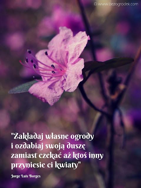sentencje o kwiatach