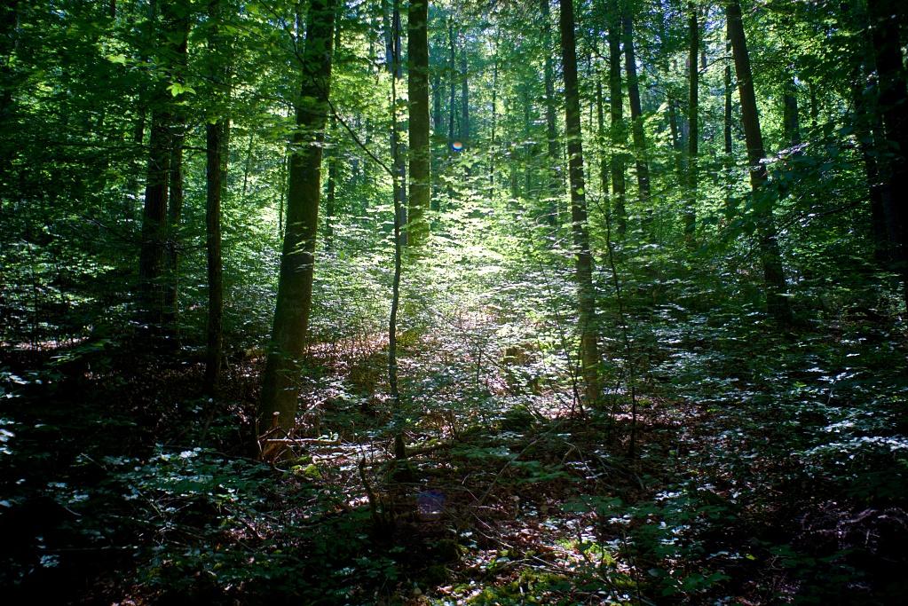 #218-02 Pantar f4 30mm - Wald im Schaichtal