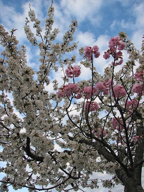 Quimera de árbol frutal
