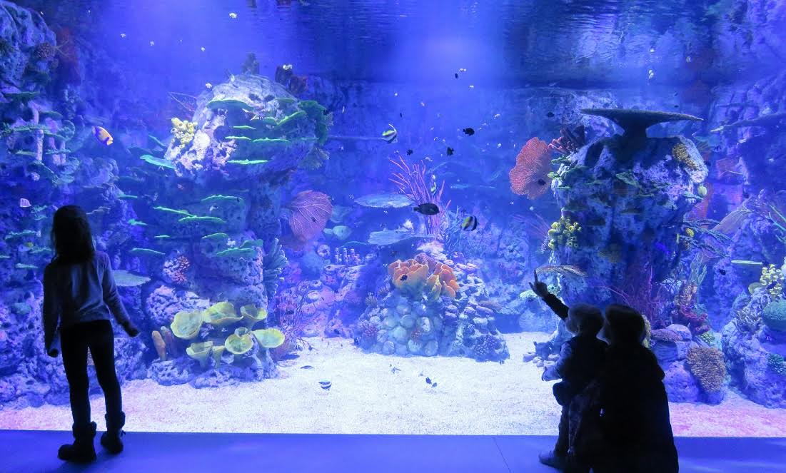 Acuario corales