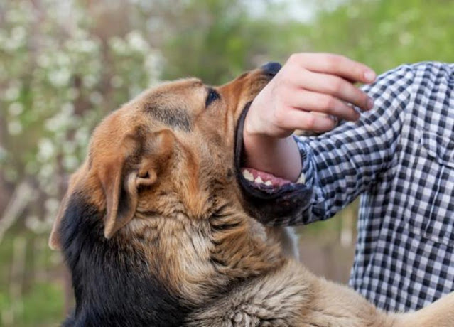 Diseases transmitted by dogs through saliva