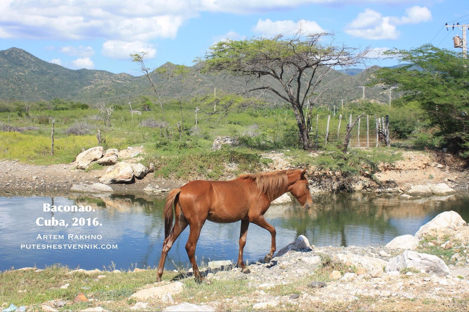 Конь и природа острова Куба