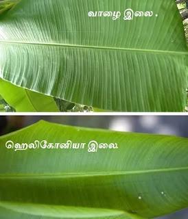 Banana & Heliconia Leaves