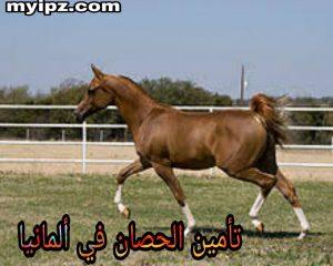 تأمين الحصان في ألمانيا