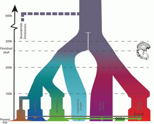 LaporanPenelitian.com Genom Manusia Modern Terbentuk 350.000 tahun lalu