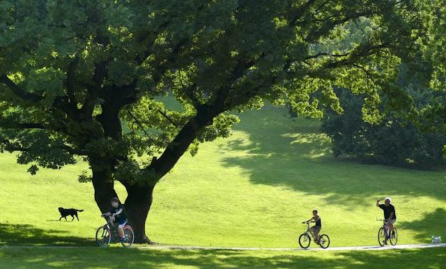 Kilencven új fát ültet a Főkert a Tabánban