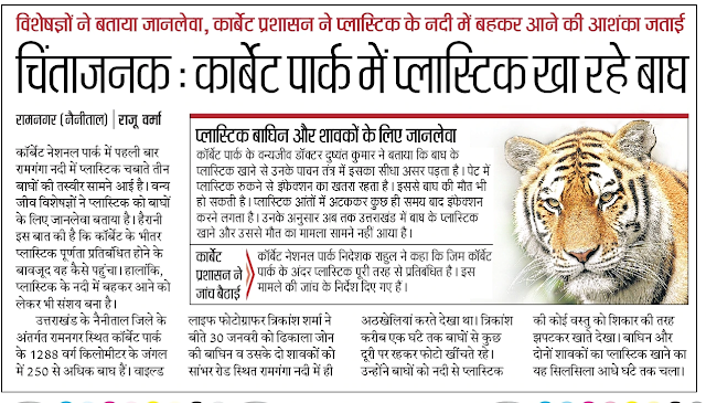 Tigers are eating plastics in Corbett National Park