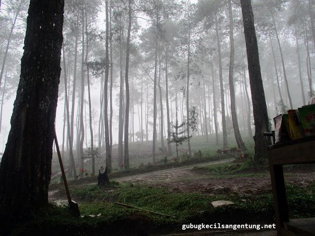 hutan pinus wonogiri