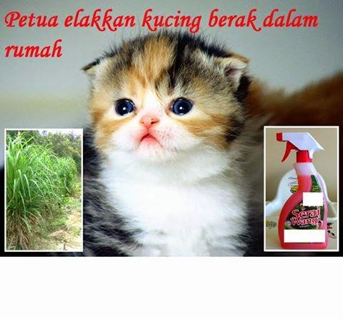 Kaedah Elak Kucing Berak Dan Kencing