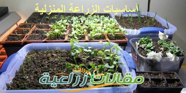 أساسيات الزراعة المنزلية - مقالات زراعية